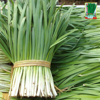 Chinese Leek vegetable garden seeds 1000 seeds colorful package 原装彩包韭菜原装蔬菜种子籽
