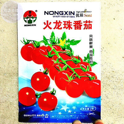 Round Cherry Tomato 'Fire Red' Organic 300 Fresh Seeds Non-GMO Vegetable Garden