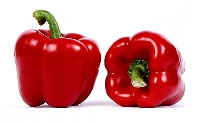 100 Seeds Willy Chilli Red Willie Pepper Rare Exotic Plant Vegetable Seeds Best