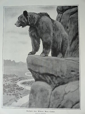 "Philip R. Goodwin, 1903 Grizzly Bear  Print 11"" x 16"", Stunning Image"