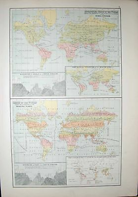 Old Antique Print Black'S Map 1890 Zoological Chart World Plants Animals 19th