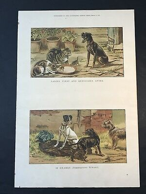 Antique Print DOGS & CATS, S.T Dadd, Supplement THE ILLUSTRATED LONDON NEWS 1886