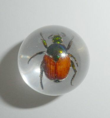 2 cm Insect Marble Sphere Golden Cockchafer Beetle Popillia mongolica Clear