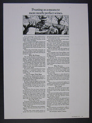 1977 E&J Gallo Wine Winery pruning the grapevines pruner art vintage print Ad