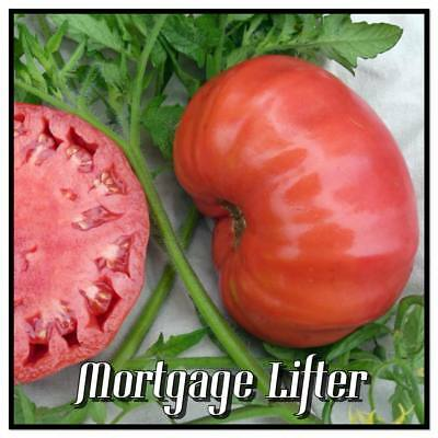 Mortgage Lifter Non-GMO Heirloom Tomatoes - 20 Organic seeds