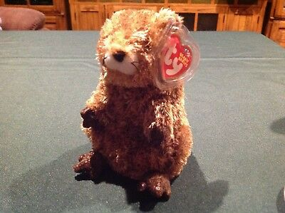 TY Beanie Baby -PUNXSUTAWN-e PHIL the Groundhog (Internet Exclusive) 2002  Mint 64f61abb73b6