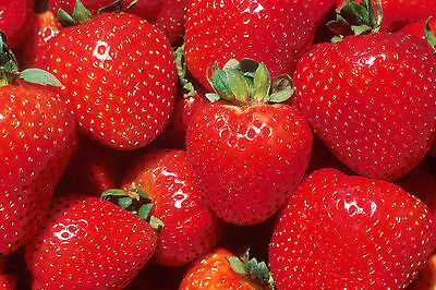 50+ Red Strawberry seeds strawberries seed
