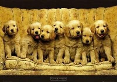 Puppies On Sofa Poster