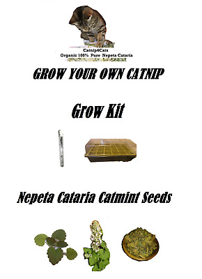 Grow Your Own Catnip Kit Seeds Propagator Nepeta Cataria Cat Mint Grass Herb Toy