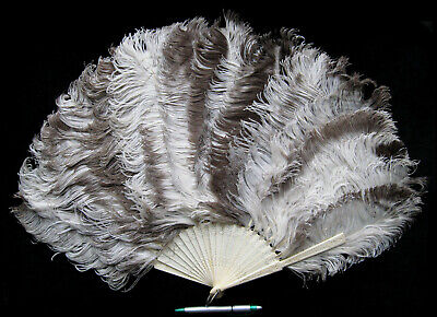 Nice Large Antique Victorian Ostrich Feather Fan Eventail Abanico Fächer ca 1885