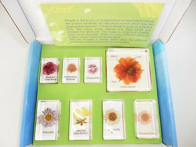 8 Flower Collection Box Set in 8 clear block Education Plant Specimen Kit
