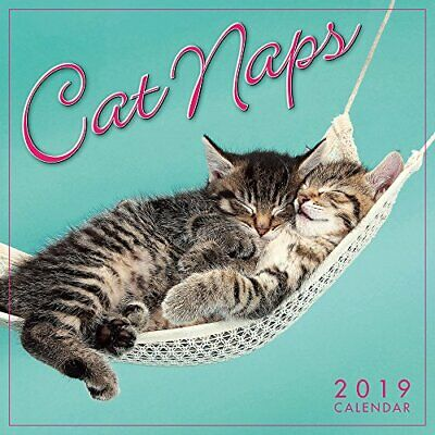 Cat Naps 2019 Mini Wall Calendar (Mini Square) by Sellers Book The Cheap Fast