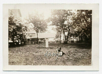 BOSTON TERRIER Dog lying in the grass by himself* old Photo