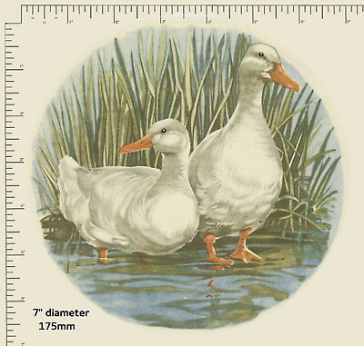 "1 x Waterslide ceramic decals Birds Geese Water Reeds 7"" circular. Plate R85"