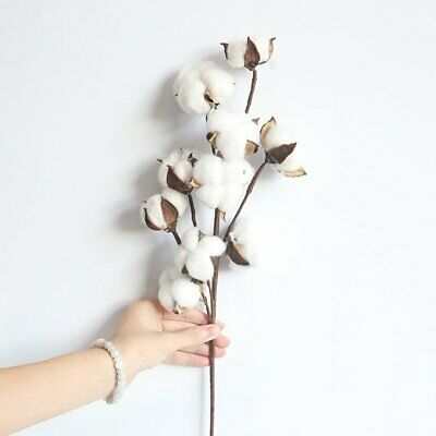 Simulation Flower 10 Natural Cotton Branches Manufacturers Fake Flowers-UK