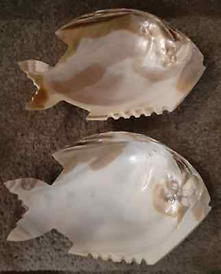 VINTAGE PAIR of HAND CARVED SEA SHELLS in SHAPE of FISH GREAT CONDITION