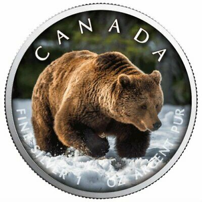 GRIZZLY BEAR ON THE TRAILS OF WILDLIFE  MAPLE LEAF - 2019 1 oz Silver Color Coin