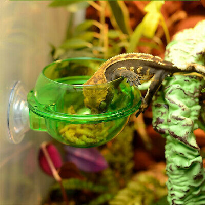 Lizard Food Container Turtle Worm Live Reptile Bowl Food Cup Sell Well Unique