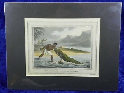 Orme & Howitt Georgian Hand Colored Aquatint 1813 African Crocodile Hunters