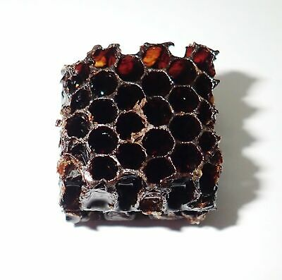 Honey Bee Apis mellifera Hive Lucite Dipped Education Insect Specimen