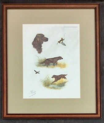 Boris Riab Irish Setter Hunting Dog Signed Vintage Lithograph