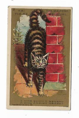 1881 Quack Medicine Trade Card Allen's Lung Balsam NO OPIUM Family Remedy CAT