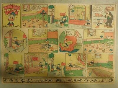 Donald Duck Sunday Page by Walt Disney from 5/18/1941 Half Page Size
