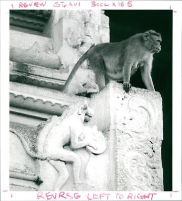 Monkey and stone ancestor at Madurai - Vintage photo