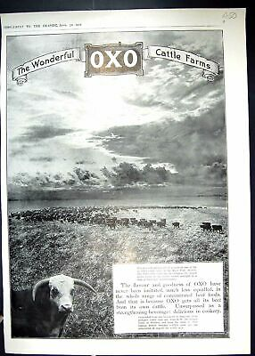Old 1910 Oxo Cattle Farm Bovril Factory Argentina Argerisch Calvo Shi 20th