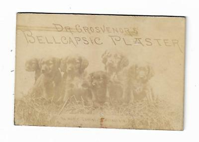 Old Real Picture Medicine Trade Card Dr. Grosvenor's Bellcapsic Plaster Puppies