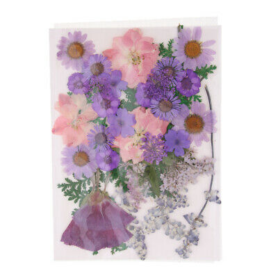 Natural Pressed Real Dried Flowers Plant DIY Phone Case Jewelry Resin Crafts