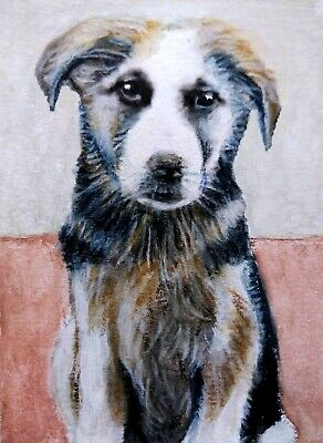 Original watercolor aceo dog 219480.Single-piece work by S.Gnoffo