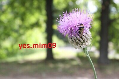 DIGITAL Photo Picture Image JPG Wallpaper Free Worldwide Email Delivery Flower 1