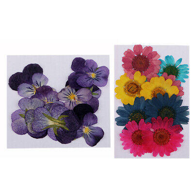22pcs Pressed Real Dried Flowers Violet Flower Scrapbooking Embellishments