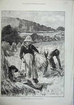 Original Old Antique Print 1886 Agricultural August Hay Reaping Binding Farming