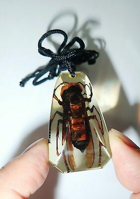 Insect Necklace Lesser Banded Tiger Hornet Specimen SD13 Amber Clear