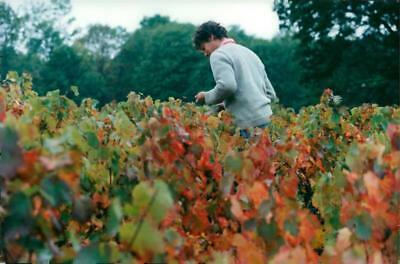 France Agriculture. Winemaking. Emmanuel Fellots on the farm Pierre-Filant - Vin