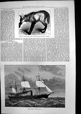 Old Antique Print Japanese Corvette Kau-Go Red Wolf Buenos Ayres Zoo 1878 19th