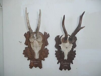 TWO 1985 and 1996 DATED BLACK FOREST ROE DEER ANTLERS MOUNTS SIMILAR DESIGN
