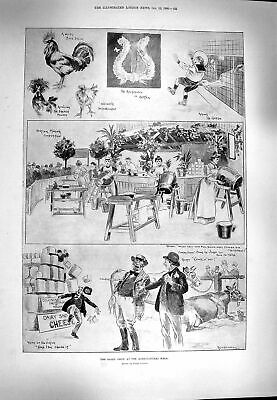 Original Old Antique Print 1900 Dairy Show Agricultural Animals Andree Balloon