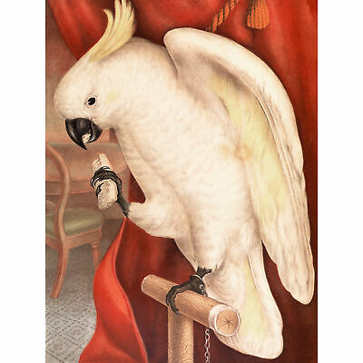 James Whitley Sayer Great Sulphur Crested Cockatoo Large Canvas Art Print