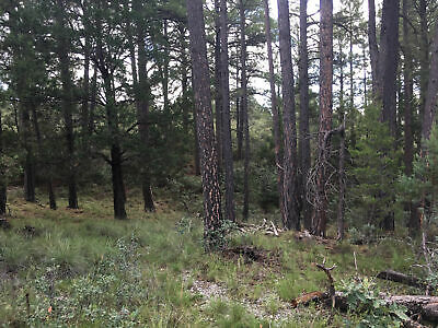 Building Lot/Land - Mountains! - Power/Water! - New Mexico - Only $98 A Month !!