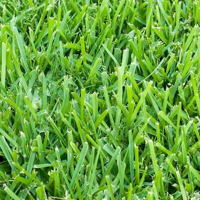 Harmony St. Augustine Sod Plugs Outdoor Grass Home 64 sq. ft. (36-Count Trays )