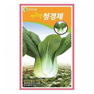 2 packs Danong Seed Bok Choy Vegetable  Chinese Cabbage Home Garden 청경채 akj