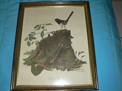 """Antique Vintage Black & Brown Bird Etching """" Rufous-sided Towhee """" By Ray Harm"""