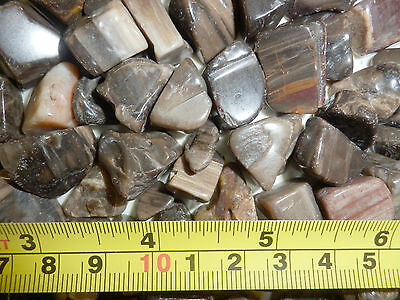 Tumbled Fossil Stone Petrified Wood 0.7 to 8.7 g small size pieces 180 gram Lot