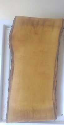 Ulivo massello per intaglio, Olive wood for carving. Cm. 3x15 spess. 1