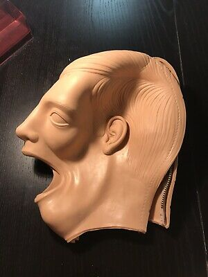 Columbia Dental Manikin Shroud