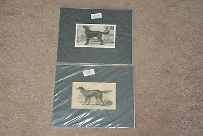 Set of 2 guaranteed original Gordon Setter prints- dated 1885 and 1913, matted