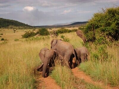 Maasai Mara Premium Private Safari  (4 days, Price for 2 pax - can be lower)
